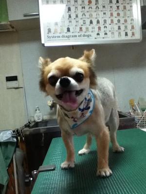 Kootaroo0830