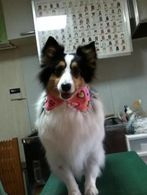 Yuzu0118
