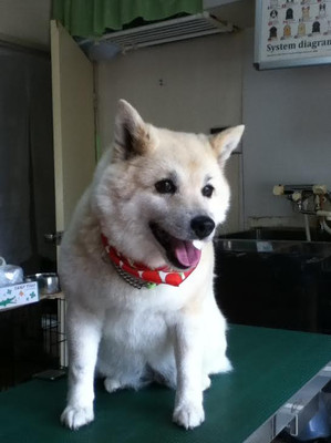 Ryu0424_2