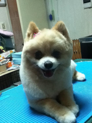 Momochan0320